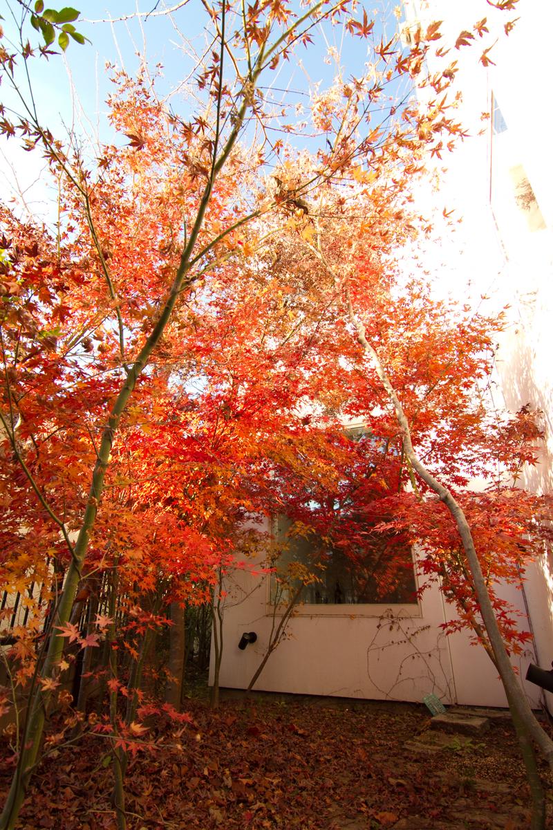 Ristorante Mondo, Jiyu-gaoka, Tokyo, 2007
